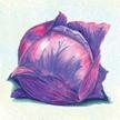 Cabbage: Tete Noire image
