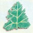 Kale: Dwarf Siberian image