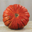 Pumpkin: Rouge Vif D'Etampes image