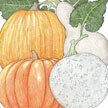 Pumpkin: Fall Rainbow Mix image