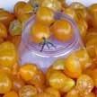 Tomato: Blondkopfchen image