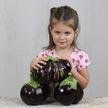 Eggplant: Aswad image