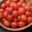 Tomato: Principe Borghese Tomato image