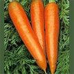 Carrot: Danvers 126 image