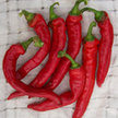 Peppers: Jimmy Nardello's Italian image