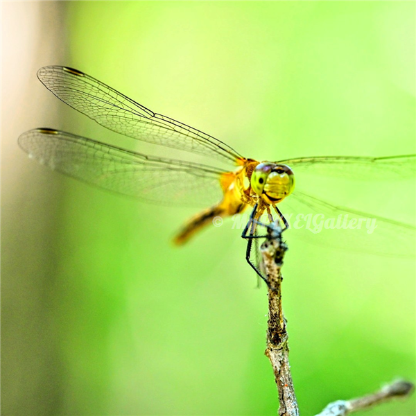 The smiling DragonFly