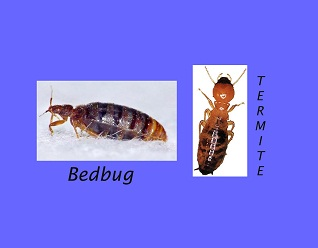 Termites And Bed Bugs Striking Fear Into Hearts Of