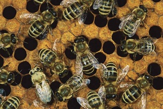 bees nests eliminated   Invader Pest Management