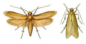 Fabric Pests