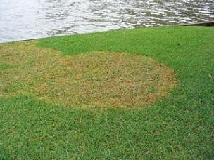 Choosing The Right Lawn Care Service Company Slug A Bug