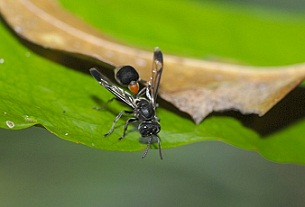 Watch Out for Wasps: Florida's Most Common Stinging Pests