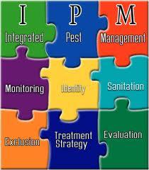 IPM, Young Environmental