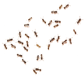 how to keep ants out of your house naturally