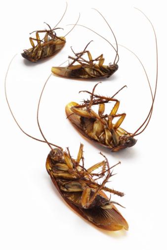 pest control, Ransford Pest Control
