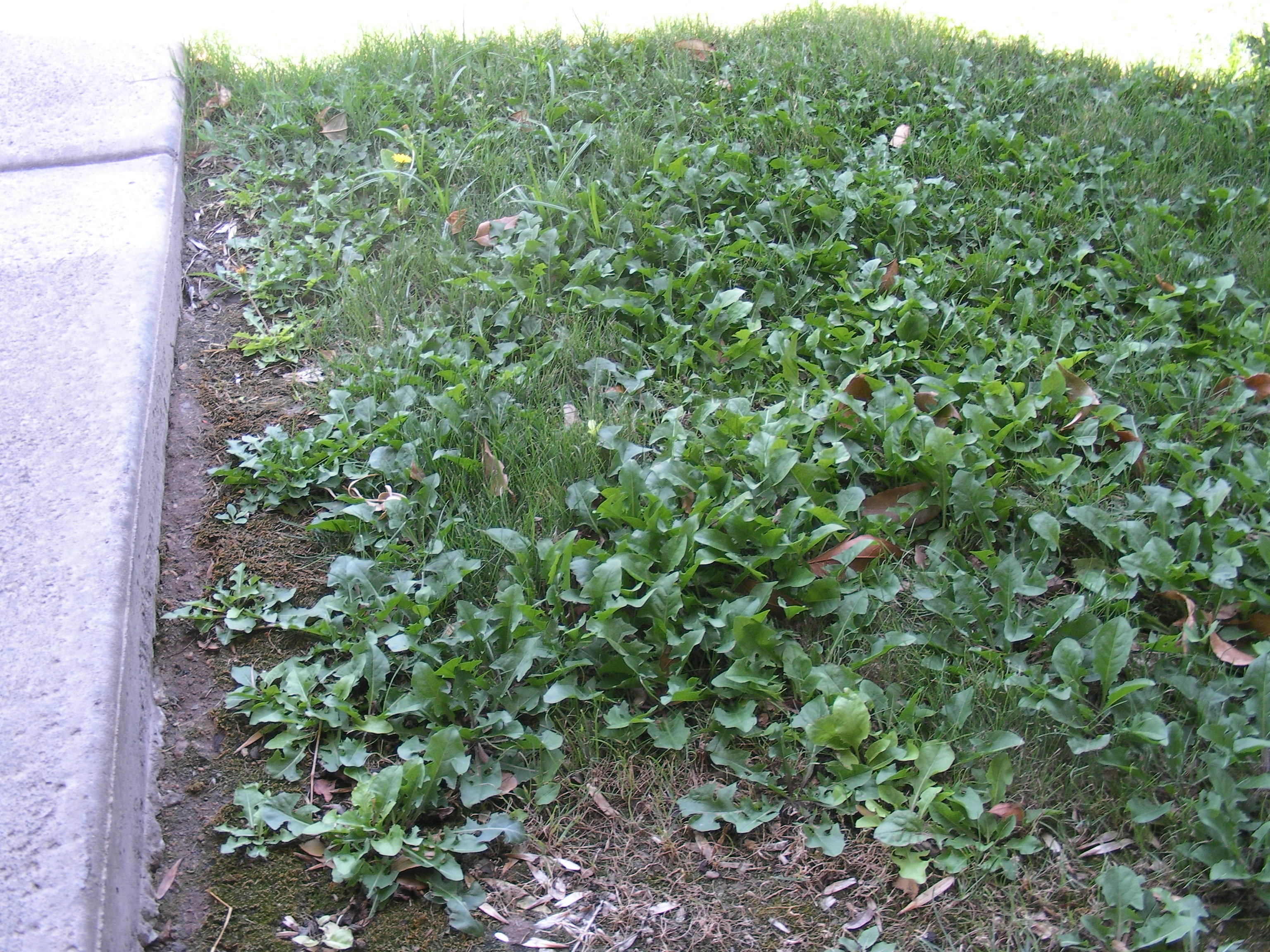 stopping weeds before they start  slugabug pest control, Natural flower