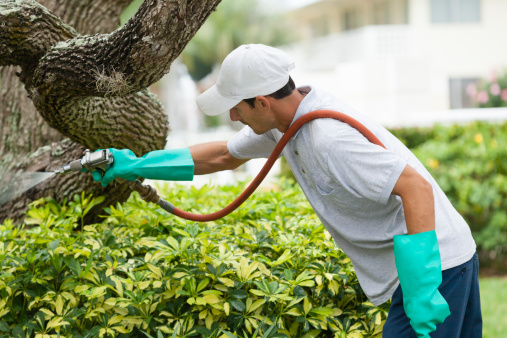 green pest control, Ransford Pest