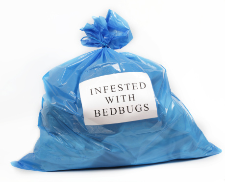 bed bug, Young Environmental