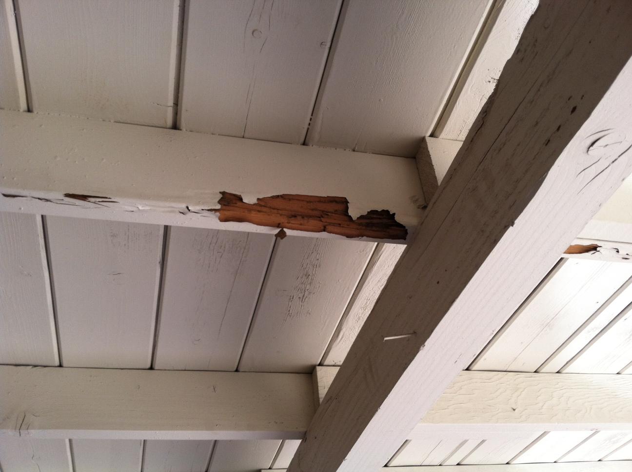 termite damage, Ransford Pest