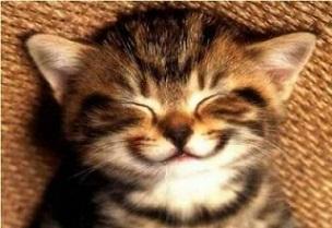 Dental Hygiene for your cat.