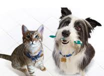 Why pet dental health is important?