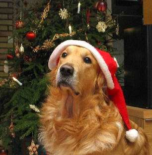 Holiday tips for a happier pet from your pet dentist!