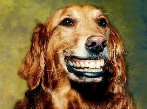 Save $50 on your pet dental visit before Dec. 31!