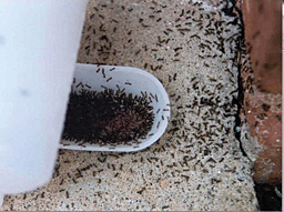 Ants Young Environmental Solutions