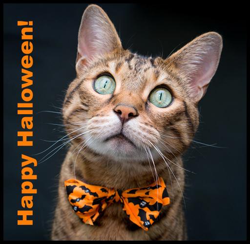 halloweencat_512x500_ahw4.jpg