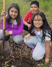 IIvet Sosa-Aragon, Daniel Juarez and Jaizza Ramirez plant a tree at school
