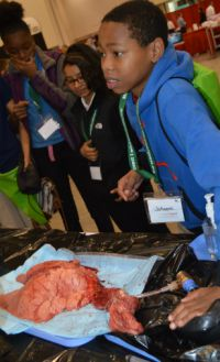 Sherwood Park Global Studies Academy sixth-grader Jaheem Aubrey works to inflate a heart and lungs