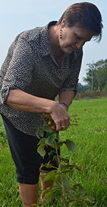 Teacher Dolores Keeley inspects raspberry bushes planted in the spring by students on Forest Hills Eastern High property