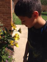Using his sense of smell, a student sniffs a perennial flower