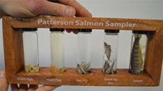 Science teacher Kevin Vance's classes learn about stages of salmon from egg to adult