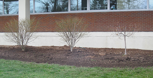 The entire school landscape was cleared and prepped for planting.