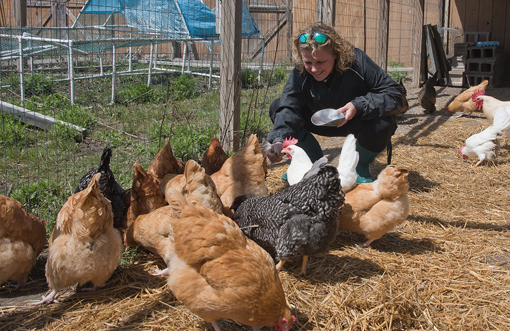 Heather Pratt, a Sustainable Agriscience instructor at the Kent Career Tech Center, hand-feeds some greens to her friends in the chicken coop