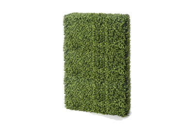 Boxwood Hedge (Tall)