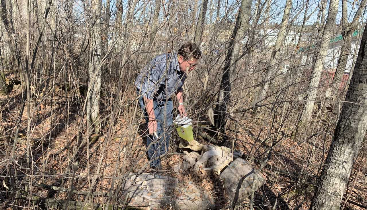 Paow News: Spring Cleanup Targets Discarded Needles