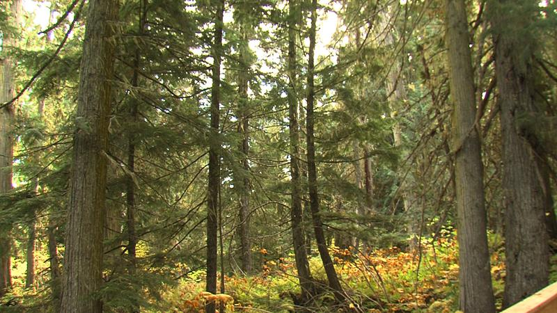 $8.7 million upgrade coming for Whudujut/Ancient Forest
