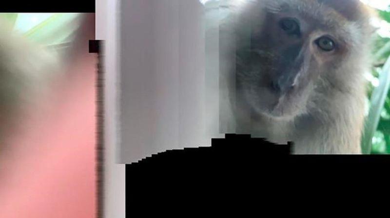 Monkey grabs student's phone, takes selfies