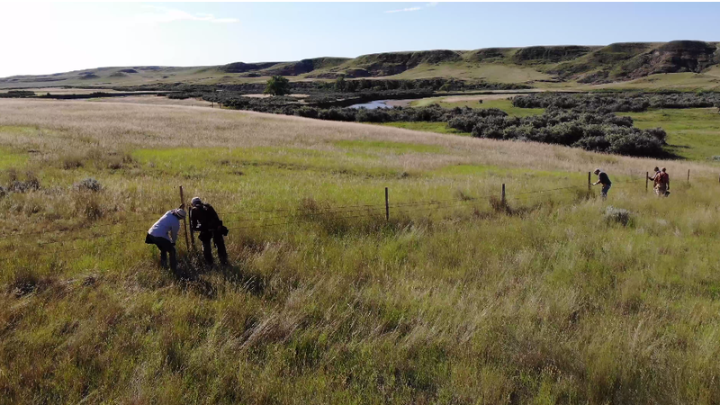 Fence replacement project aiding pronghorn migration