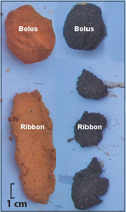 Measuring soil texture in the field fact sheets for Soil ribbon test