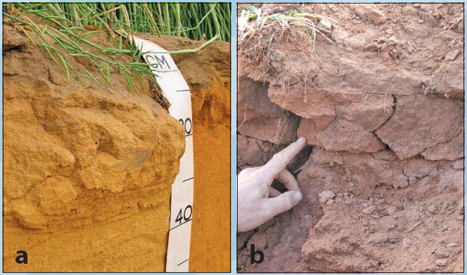 Subsurface compaction nsw fact sheets for Soil compaction