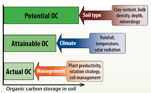 How Much Carbon Can Soil Store   Fact Sheets   soilquality