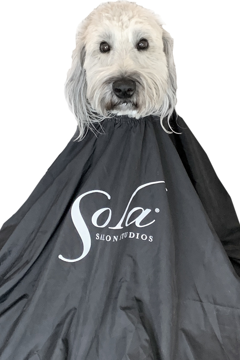 Introducing Sola Salons Pet Grooming - Sola Salon Studios