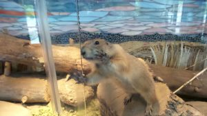 Cheyenne Mountain Zoo: Critter