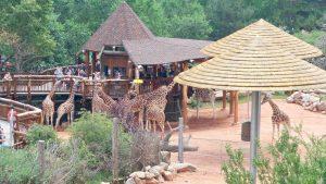 Cheyenne Mountain Zoo: Giraffe Habitat