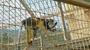 Cheyenne Mountain Zoo: Wolfs Guenon