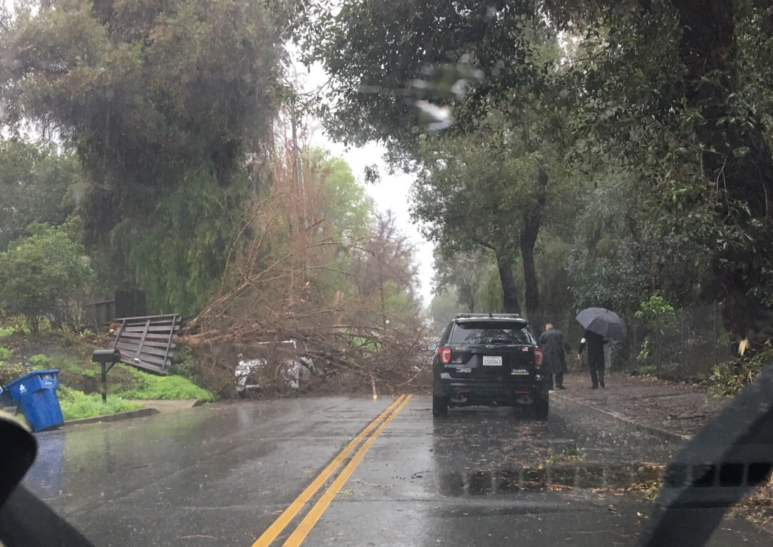 Downed Tree in Woodland Hills