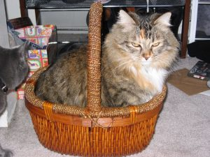 Tiny in a Basket