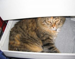 Tiny in a Drawer